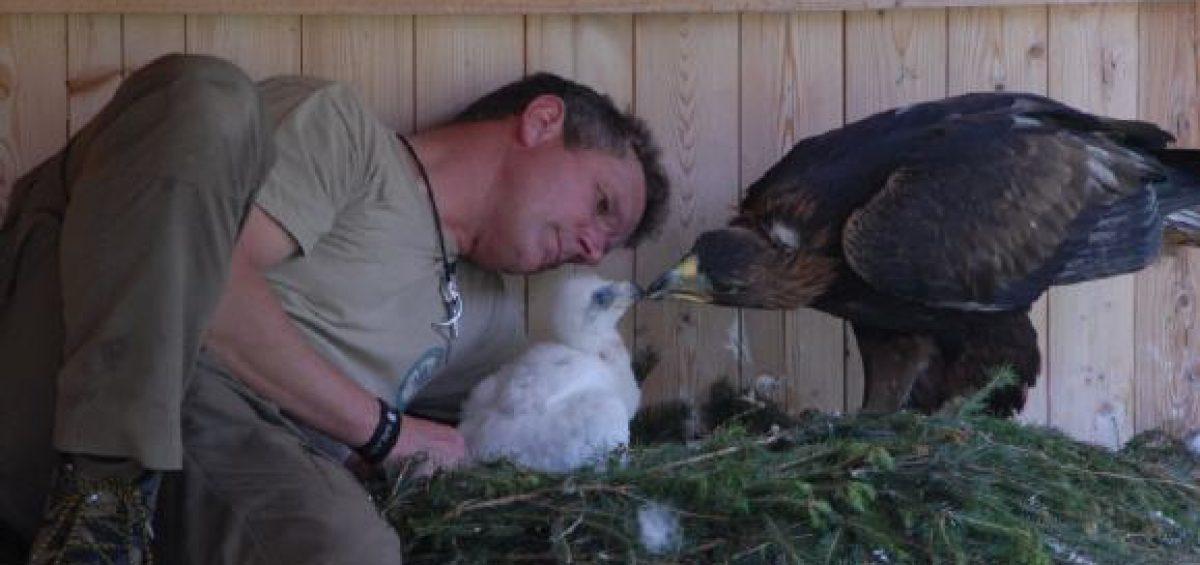 Eckard Mickisch mit Steinadler Nikita und dem Jungvogel