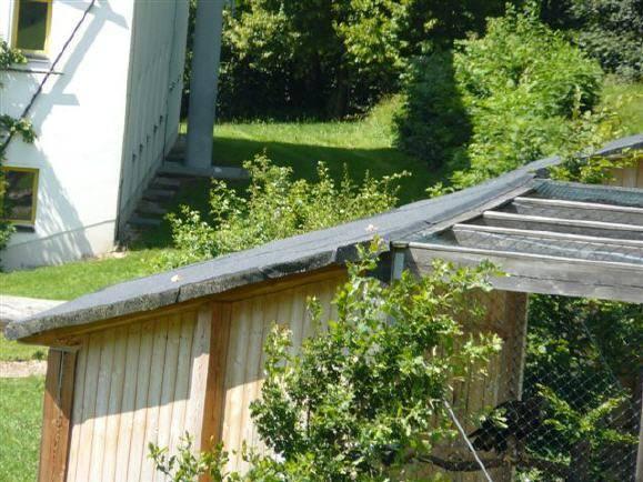 Das Dach der Voliere in der der vermeintlich vergiftete Jungadler und Nikita untergebracht waren …