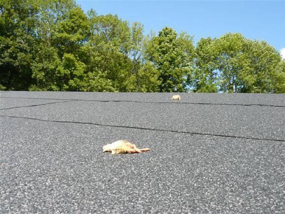 Das Dach von Nikitas Voliere näher betrachtet ...